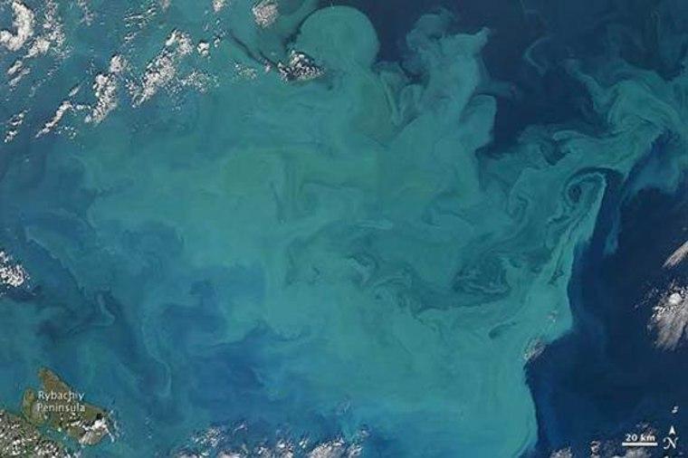 Satellite image of Barents sea