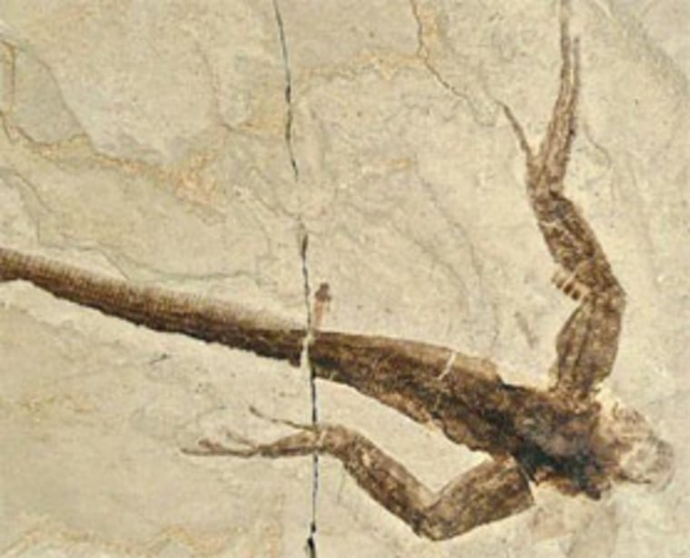 """Infrared light allowed researchers to """"see"""" the internal details of this unidentified reptile, which was unearthed at Utah's Green River Formation."""