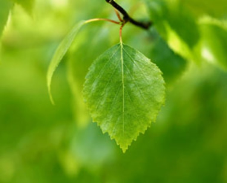 Scientists at the Massachusetts Institute of Technology have found a way to affordably mimic one of Mother Nature's best tricks— photosynthesis.