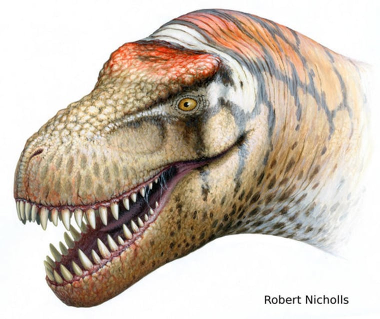 Thisnewly identified T. rex relative, named Zhuchengtyrannus magnus,probablystoodabout 13 feet tall and weighed close to 13,200 poundswhen it lived in what is now China.