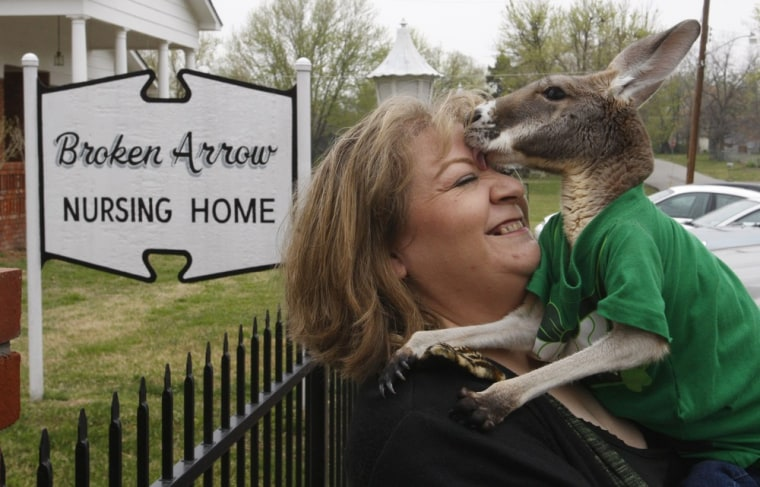 Image: Christie Carr  Christie Carr gets a lick from her kangaroo, Irwin
