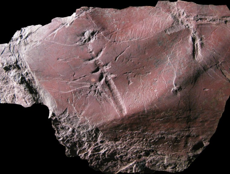 """One scientists said of thisfossil, the oldest everfound of a flying insect: """"This is a very valuable type of preservation. You can actually see some of the movements of the appendages.… That gives you some information that we don't normally get from body fossils."""""""