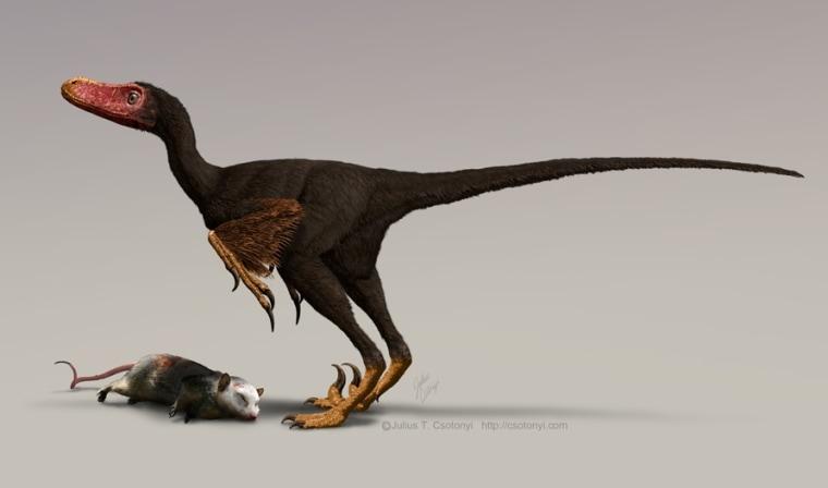 Image: Bambiraptor