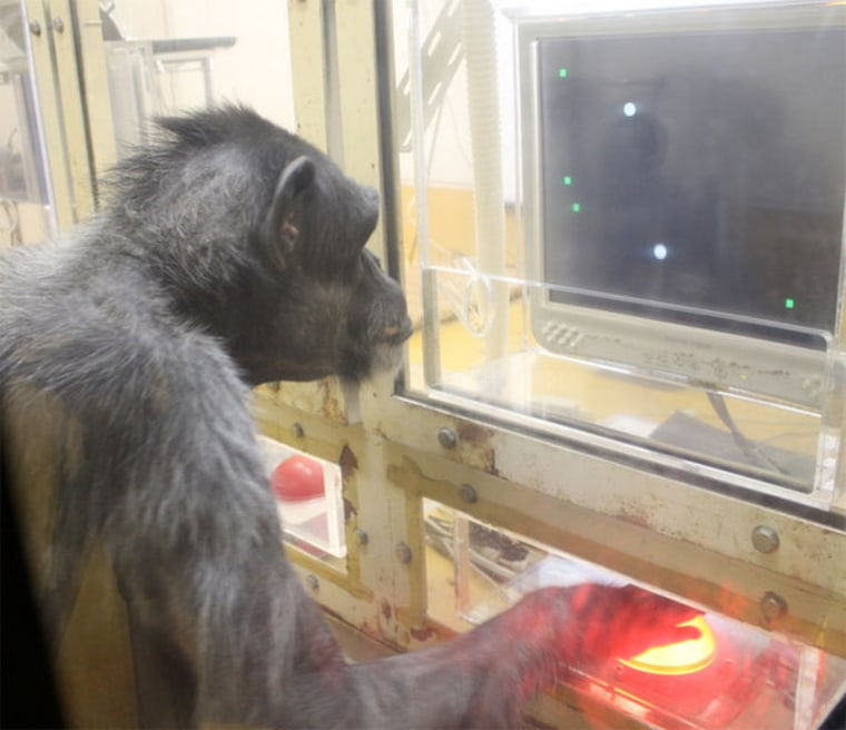 This female chimp was trained to hit green rectangular targets on a touch screen with the cursor.