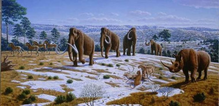 Since woollies and Columbian mammoths overlapped in time and space, it is not unlikely that they interbred. DNA research seems to confirm that.