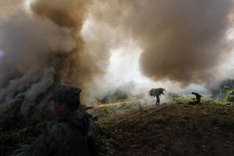 Image: Soldiers carry bundles of marijuana towards a bonfire for incineration during the destruction of a plantation in Amata, Mexico.
