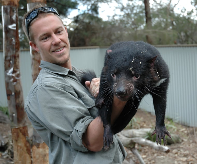 Zoo keeper and breeder Tim Faulkner holds a Tasmanian devil — an endangered marsupial found in the wild in the Australian island-state of Tasmania.
