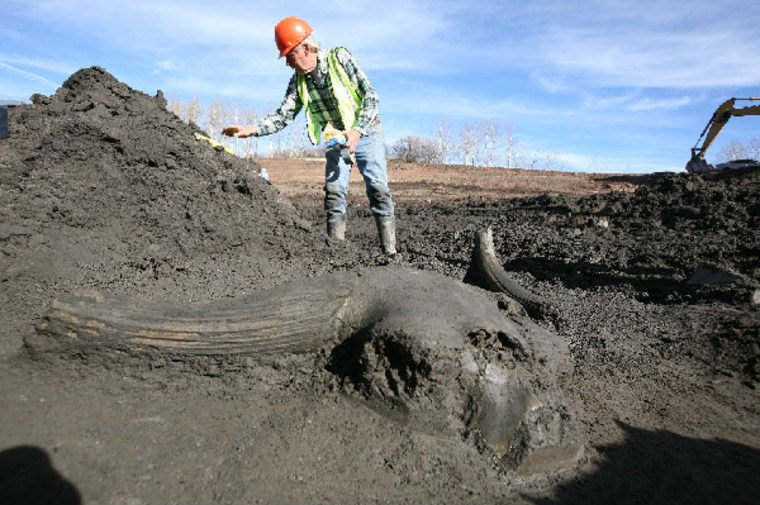 Steve Holen, curator of archaeology at the Denver Museum of Nature & Science, stands behind a giant, prehistoric bison skull unearthed at thefossil dig at Ziegler Reservoir.