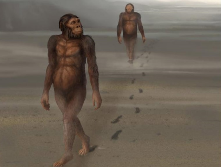 An illustration of Australopithecus afarensis walking and leaving footprints.