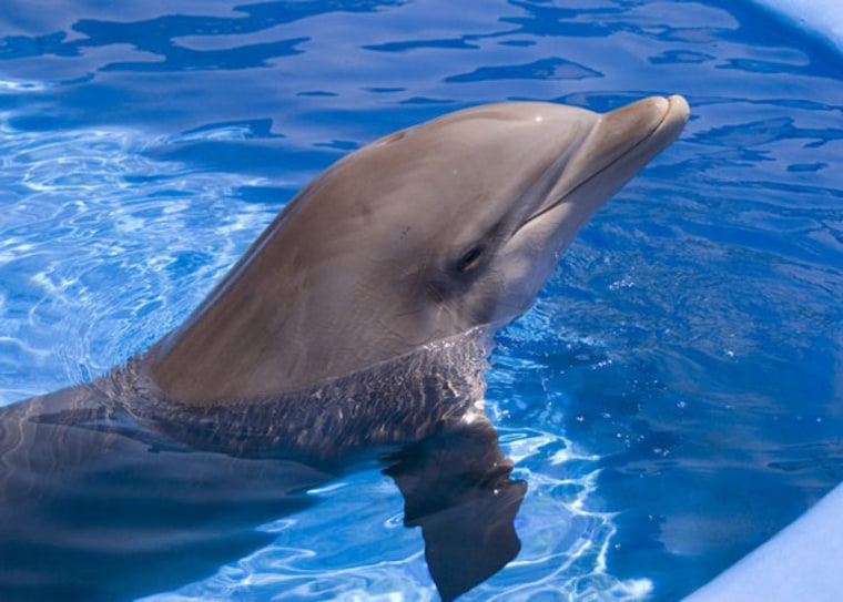 His smile gives it away: This bottlenose dolphin seems to know he holds healing secrets!