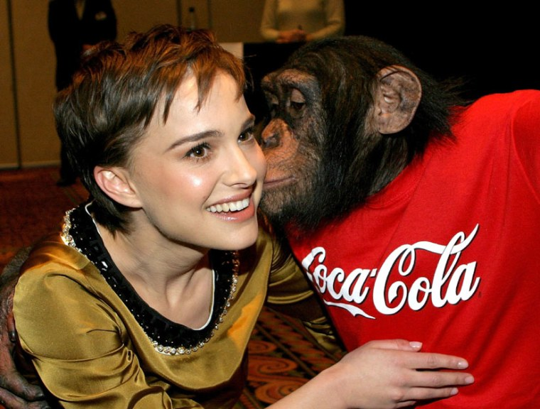 A new study says seeing chimpanzees on TV and in entertainment, such as in this photo with a chimp and Natalie Portman, may harm their endangered status.