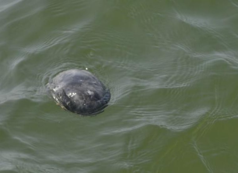 What IS that?! A single gray blob floats near the mouth of the York River.