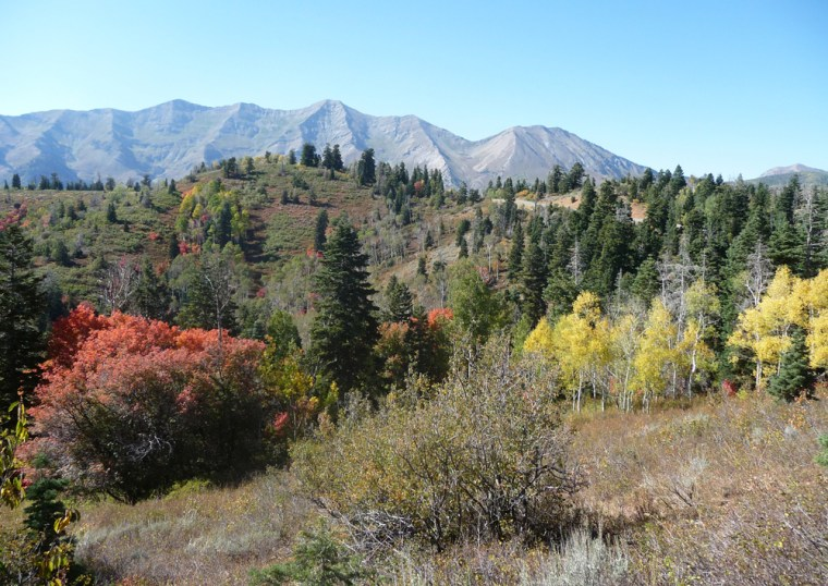 Fall foliage blazes yellow and orange in Utah's Wasatch Mountains.