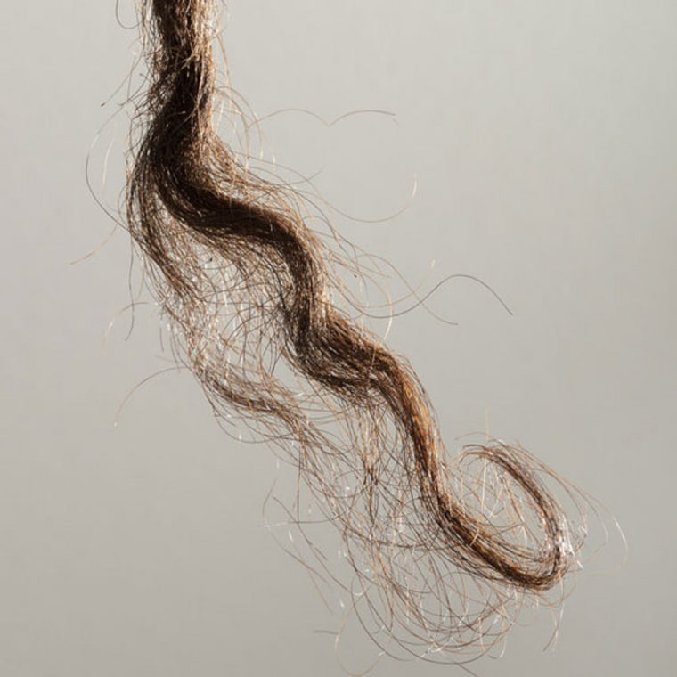 Scientists sequenced the genome contained in this hair, donated to a British anthropologist in 1921, and compared it to the genomes sequenced from Asians, Europeans and Africans. They found evidence that Aborigines are descendants of an early wave of people leaving Africa, who branched off from their Eurasian ancestors.