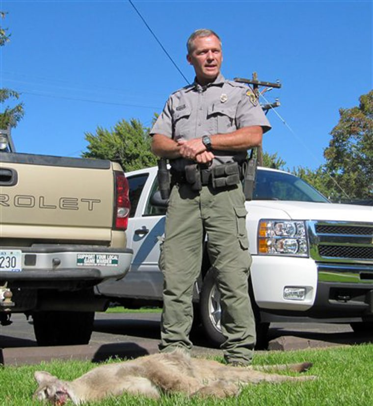 Idaho Department of Fish and Game conservation officer Matt O'Connell stands next to a mountain lion that was tracked down and killed after chasing a 10-year-old boy in southwestern Idaho.
