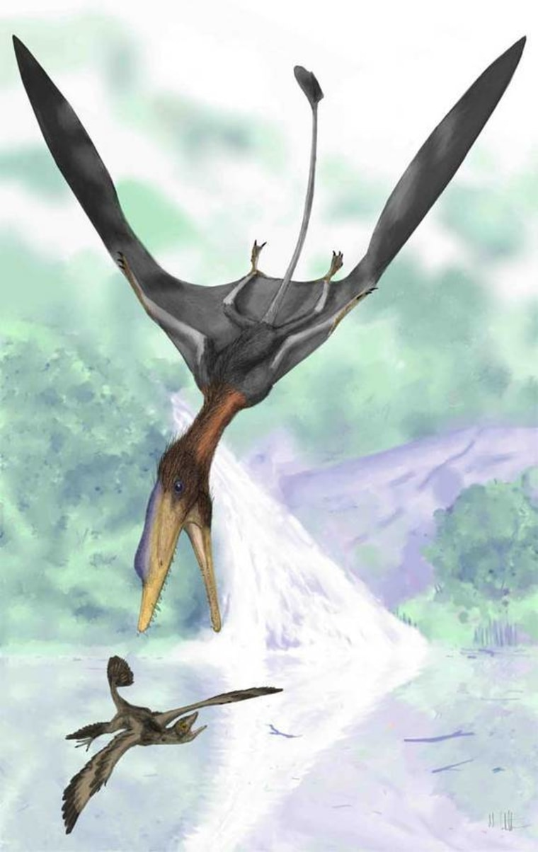 Image: Illustrated reconstruction of the pterosaur Darwinopterus modularis