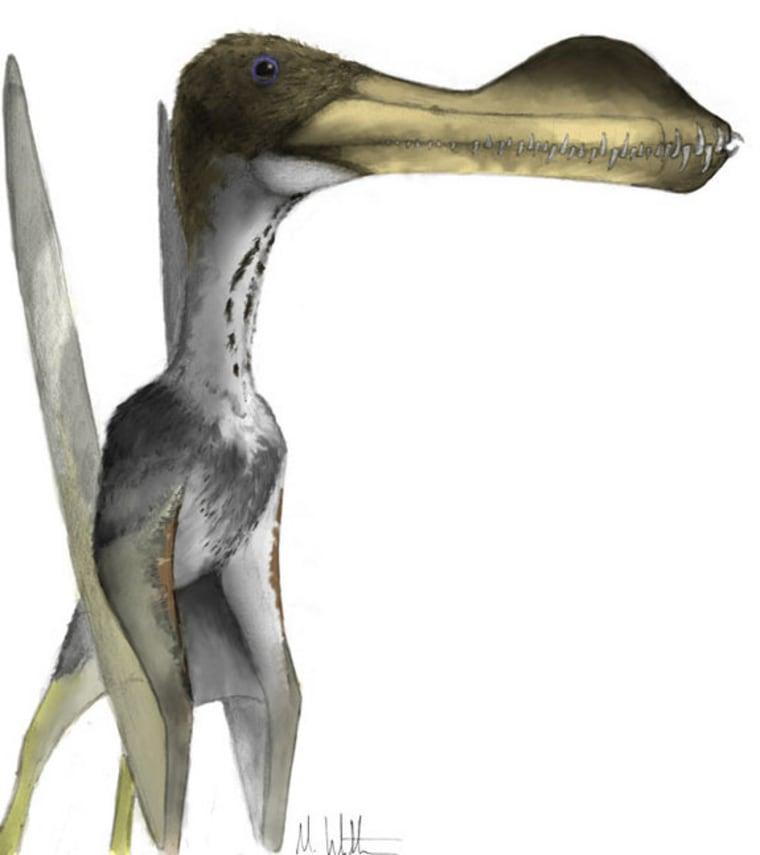 Image: Giant pterosaur, Coloborhynchus