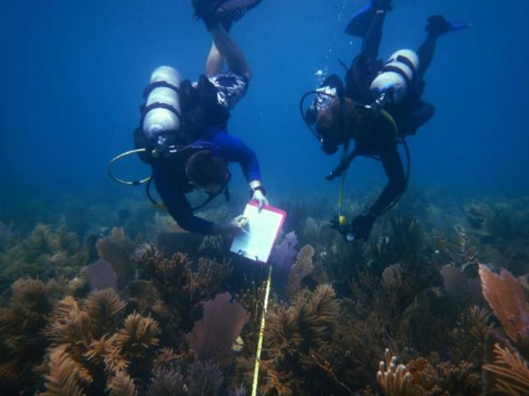 Divers survey a reef in the Keys before the big bleaching event in 2005.