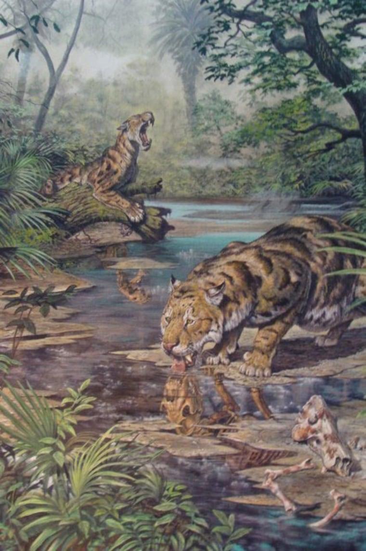 Image: Ancient saber-toothed cat Xenosmilis