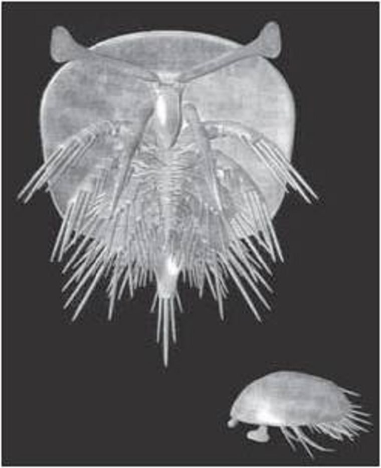 Henningsmoenicaris scutula was an early crustacean just a few millimeters long with compound eyes.