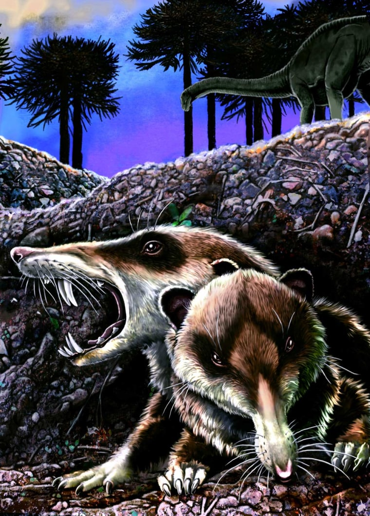 """An illustration of the saber-toothed squirrel-like mammal known as Cronopio dentiacutus reveals the creature's resemblance to Scrat in the film """"Ice Age."""""""