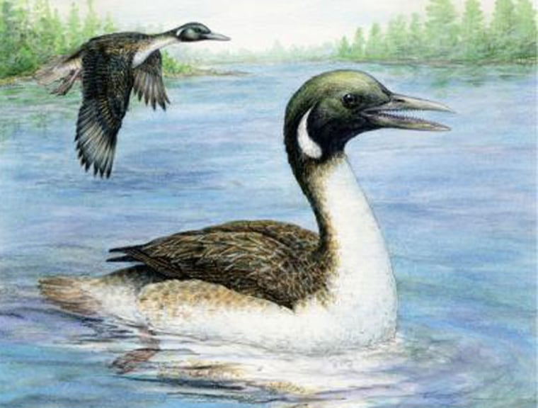 Image: Reconstruction of Early Cretaceous amphibious bird