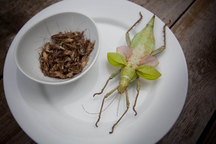 Want to surprise your guests and add some cricket and Malaysian jungle nymph to your Thanksgiving meal? Didn't think so...