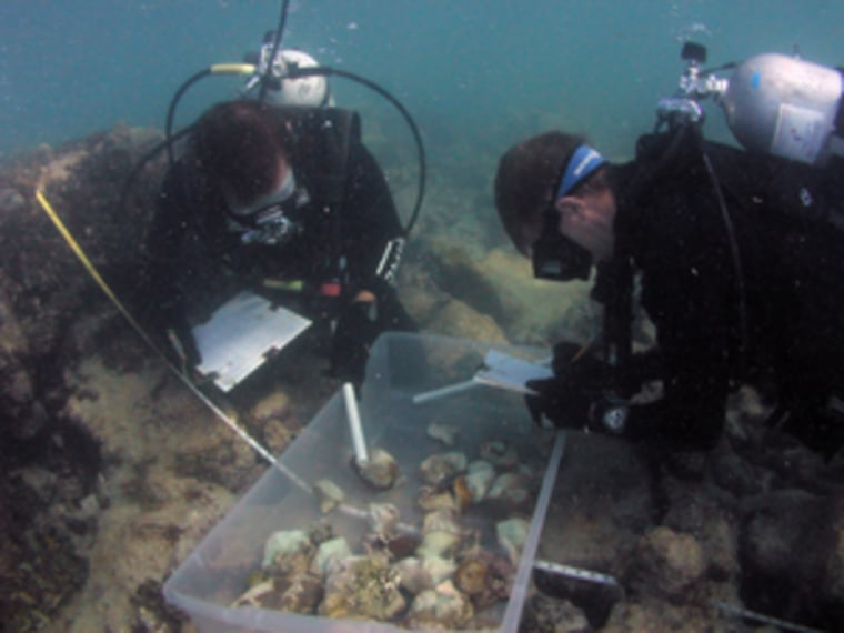 Following a 2002 boat grounding near Key West, Fla., restoration biologists assessed the damage and reattached broken corals