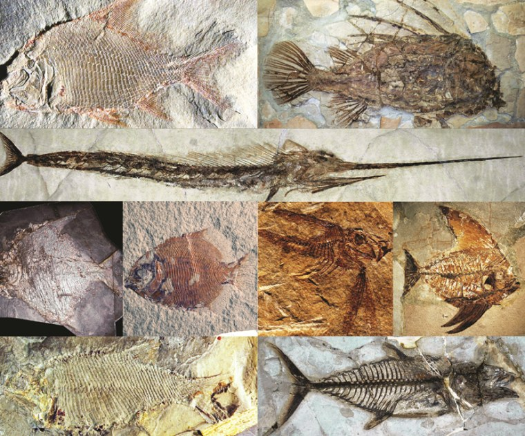 Fossils of prehistoric fish show how they evolved weird head shapes.