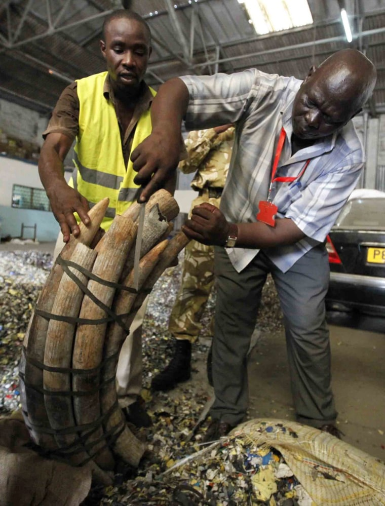 Image: Kenyan customs officers and Kenya Wildlife Services officials inspect elephant tusks which were seized inside a warehouse at the port in the Kenyan coastal city of Mombasa