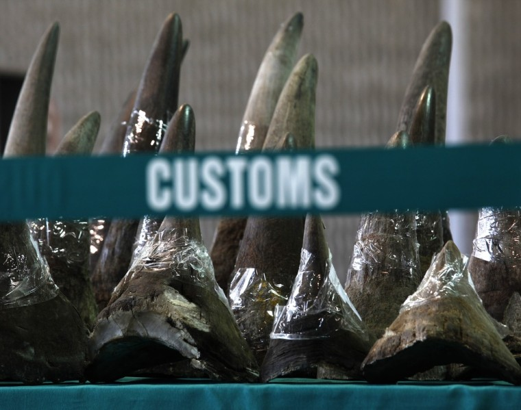 Image: Part of a shipment of 33 rhino horns seized by Hong Kong Customs and Excise Department is displayed during a news conference in Hong Kong