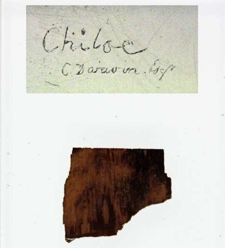 """A glass microscope slide from the British Geological Survey preserves a fossil specimen from Chiloe Island, labeled """"C. Darwin Esq."""""""