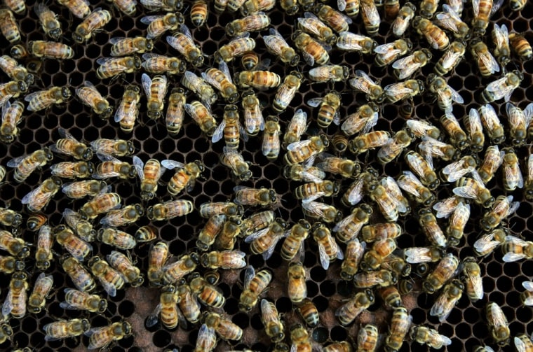 Image: Bees