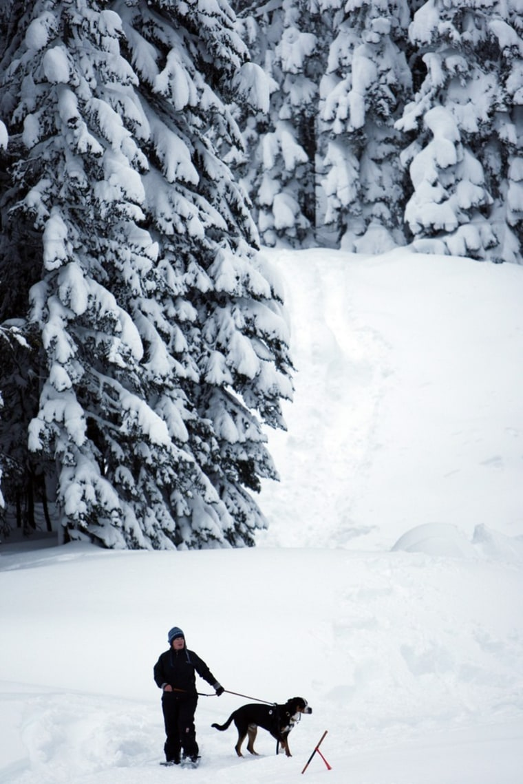 Image: A woman and her dog stand in the skiing area close to where three skiers died in an avalanche near Stevens Pass in the Cascade Mountains, Washington