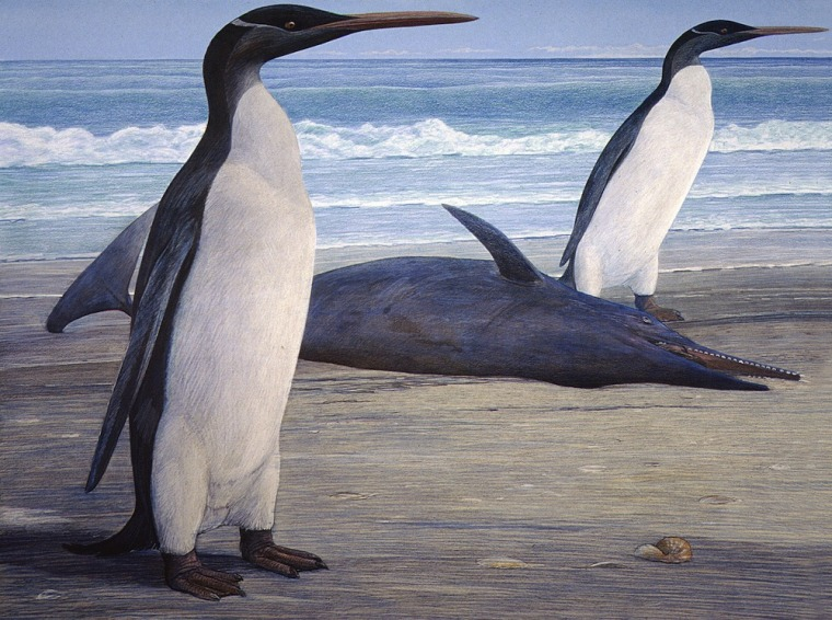 An artist's rendering of two Kairuku penguins onshore, and a stranded Waipatia dolphin.
