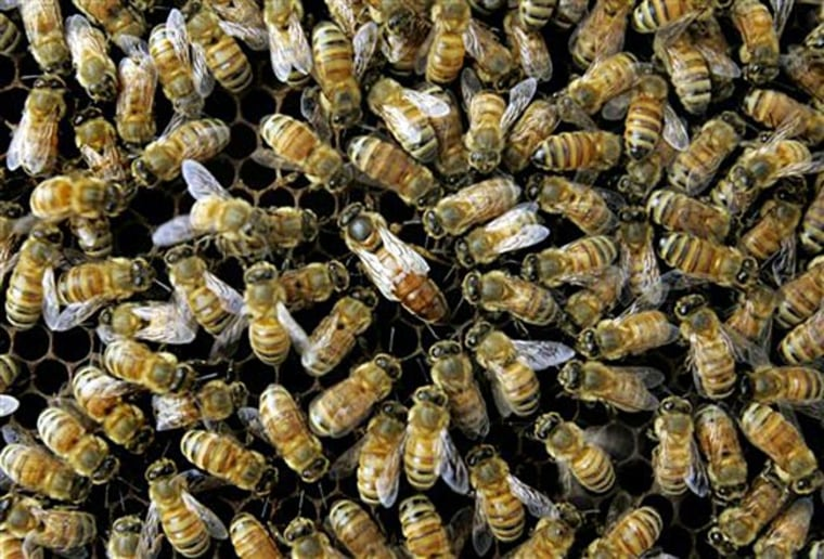 """Honeybee colonies """"have to be as healthy as possible going into the winter to survive and produce the next generation during the spring before dying off,"""" one expert notes."""