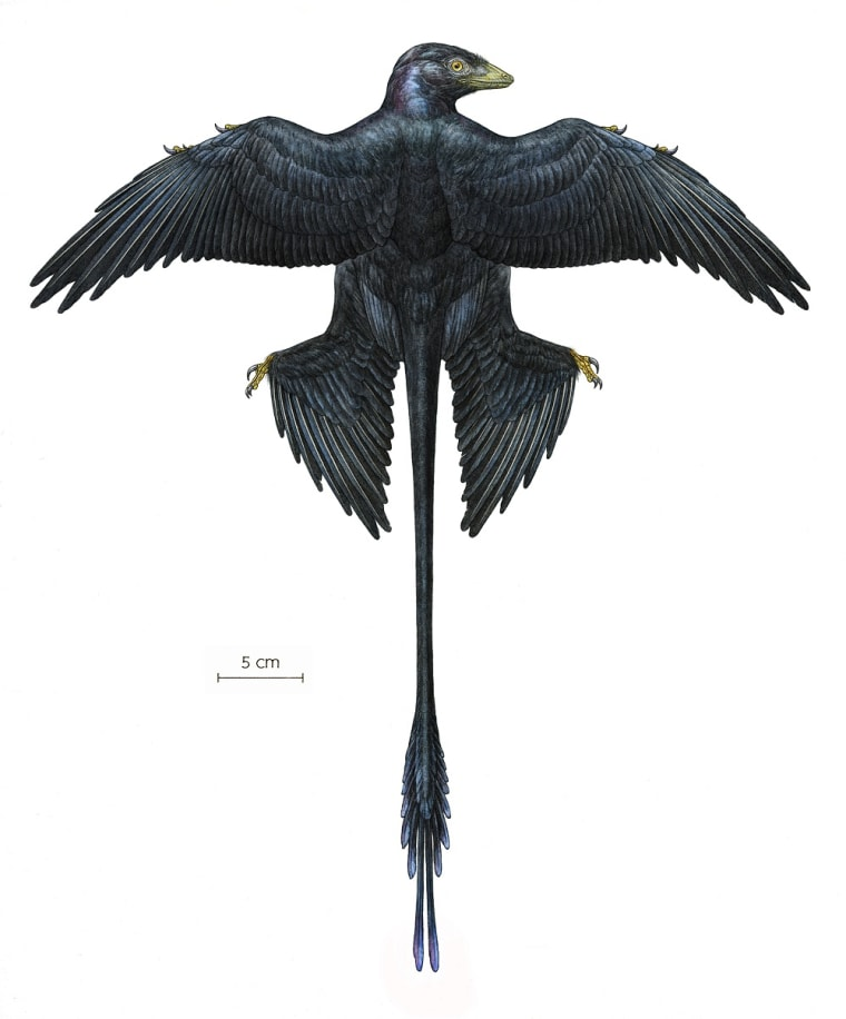 reconstruction, with four wings and elongated tail feathers.