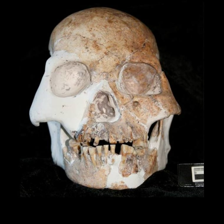 A view of a skull from the Red Deer Cave People. Researchers found the species had unique features seen neither in modern nor known archaic lineages of humans.