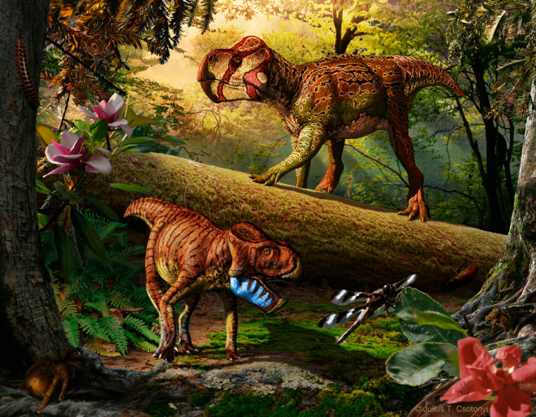(upper right) and Gryphoceratops morrisonii(lower left), new leptoceratopsiddinosaurs from Alberta, Canada.