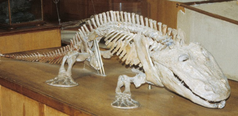The skeleton of Eryops, one of the earliest land-walking tetrapods.