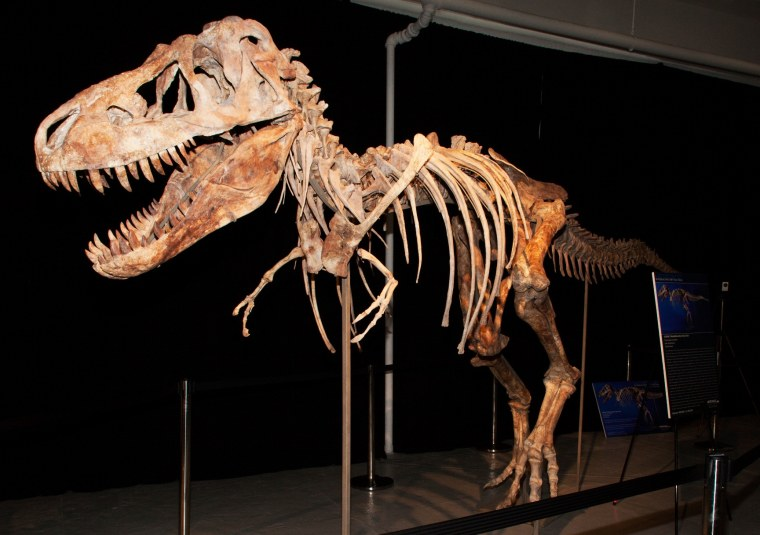 A tyrannosaur skeleton has become the focus of an international legal dispute.