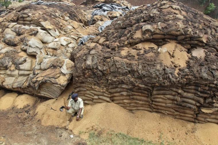 Image: A watchman sits next to stacked sacks of rotten wheat crop at Dera Mir Miran village