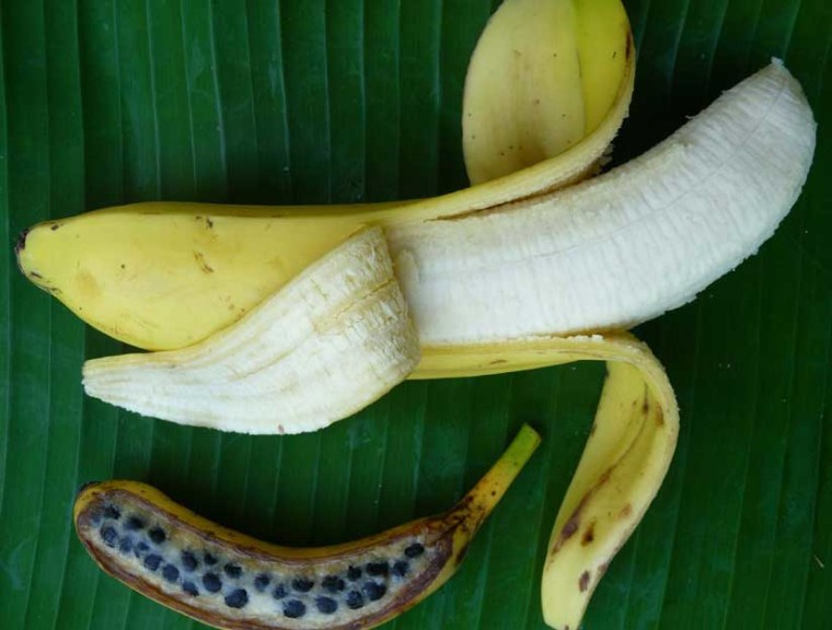 A commercial dessert banana from the seedless Cavendish cultivar in comparison with a typical banana from a wild fertile ancestor such as the one that as been sequenced.