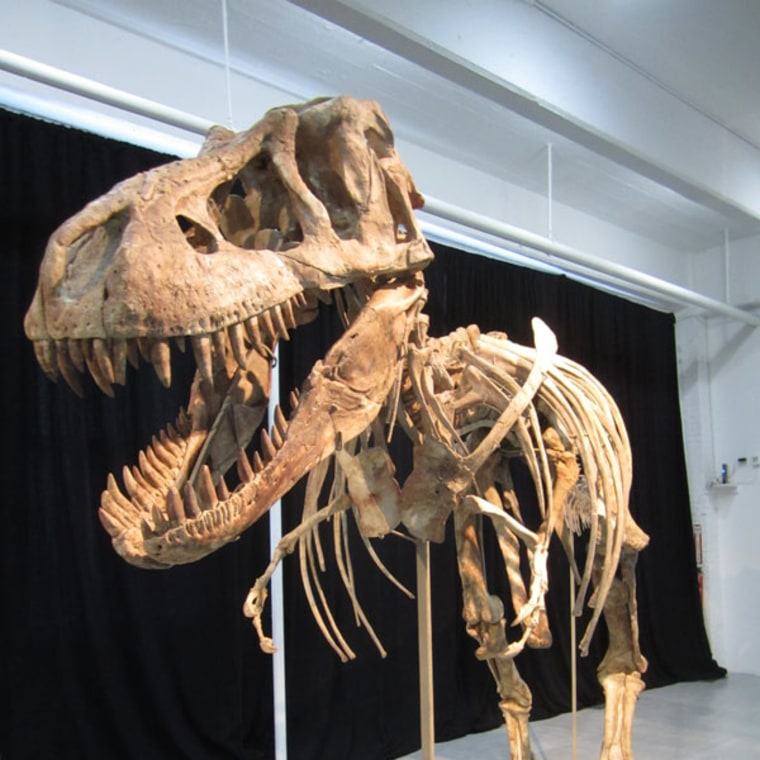 This dinosaur specimen, a relative of Tyrannosaurus rex, has been at the center of a dispute over ownership since May, when it was determined that it was taken illegally from Mongolia.