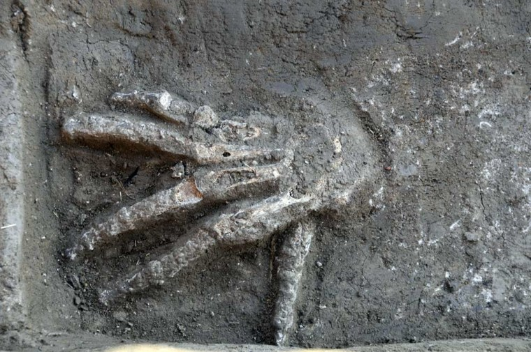 A severed right hand discovered in front of a Hyksos palace at Avaris (modern-day Tell el-Daba). It would have been chopped off and presented to the king (or a subordinate) in exchange for gold. This is the first archaeological evidence of the practice. They were buried about 3,600 years ago, when the palace was being used by King Khayan.