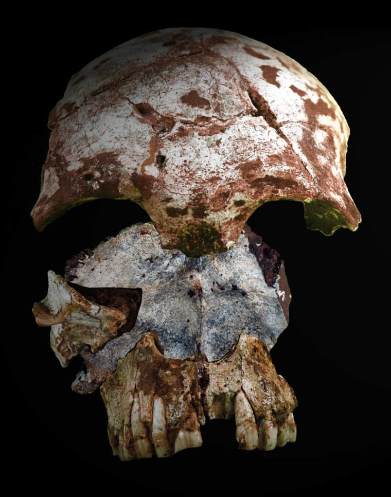 """A reconstruction of the human skull discovered in Tam Pa Ling, """"the Cave of the Monkeys"""" in northern Laos."""