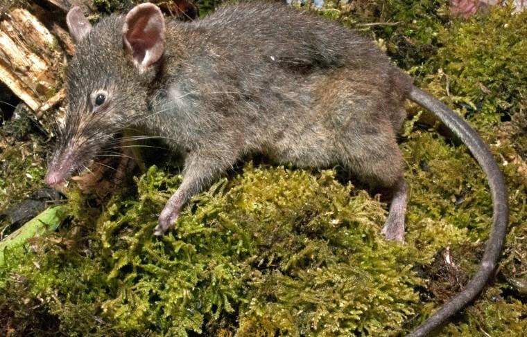 Image: Worm-eating rat