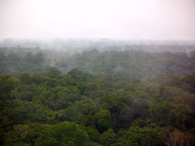 The Amazonian rain forest after a rain shower. The picture was taken from a measurement tower at ATTO site in March.