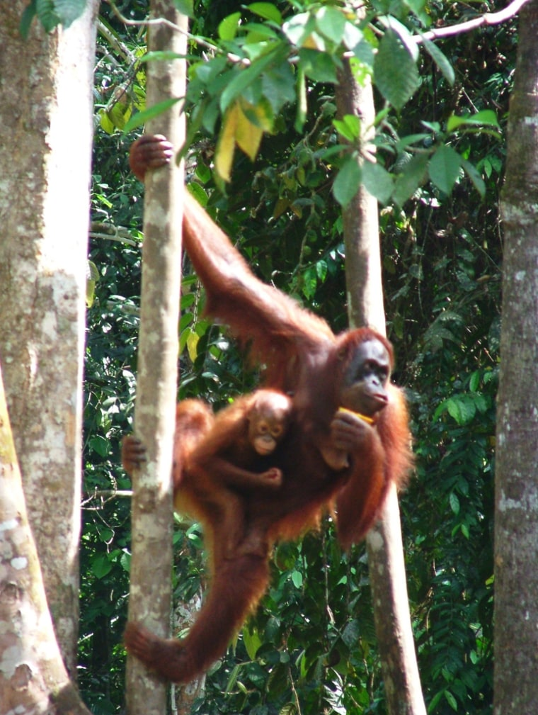 The Wildlife Conservation Society released a list of Asian animals it says are in danger of extinction.