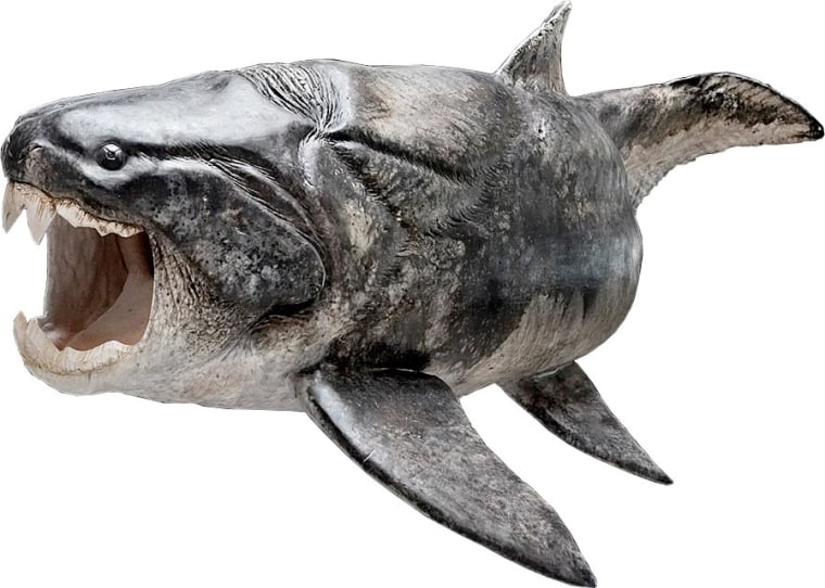 The armored fish Compagopiscis, which researchers have discovered sported teeth, would have looked something like the closely related species Dunkleosteus (shown here in a reconstruction) that also had the same kind of teeth.